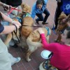 Evangelical Church sends Comfort Dogs to Boston