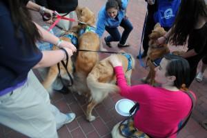 Comfort Dogs bringing healing in Boston